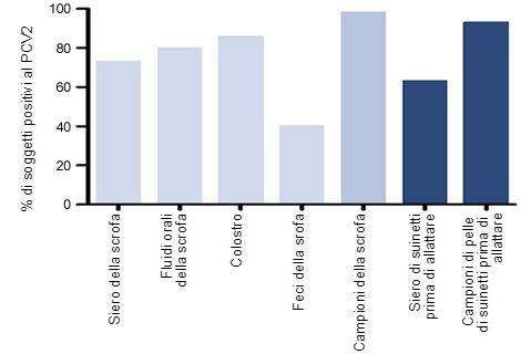 Percentuale di soggetti positivi al DNA del PCV2